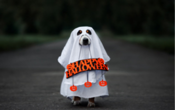 How to Keep Trick-Or-Treating Safe & Fun for Everyone